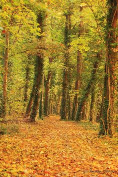 autumn fall tree forest wood nature landscape
