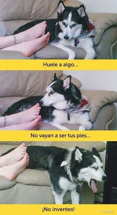 I don't even speak Spanish I'm just dying cuz of the pics Animals And Pets, Funny Animals, Cute Animals, Funny Animal Pictures, Funny Images, Funny Cute, Hilarious, Funny Spanish Memes, Pinterest Memes
