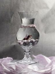 Betta Fish Wedding Centerpieces   ... Betta fish (we have 2 at our ...