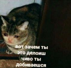 Meme Faces, Funny Faces, Stupid Pictures, Hello Memes, Russian Memes, Little Memes, Cute Love Memes, Bad Cats, Funny Video Memes