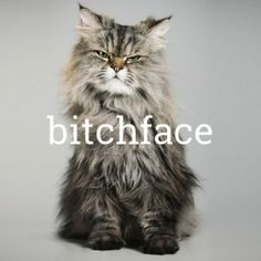 bitchface [bich-feys] A facial expression that does not consciously express a particular emotion but that others perceive as scowling, threatening, etc. My resting face, my curse. Animals And Pets, Funny Animals, Cute Animals, Funny Cute, The Funny, Hilarious, Crazy Cat Lady, Crazy Cats, Here Kitty Kitty