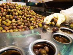 Graber Olives Fall F