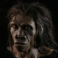 A reconstruction of a Homo erectus female (based on fossil ER by paleoartist John Gurche, part of the Smithsonian National Museum of Natural History's Human Origins Program.