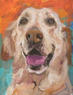 pet portraits - it is all in the eyes!