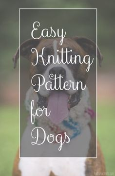 Easy Knitting Patterns for Dogs