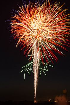 Fireworks Fireworks, Dandelion, Spaces, Explore, Flowers, Plants, Photos, Pictures, Floral