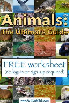 The ultimate guide to animals & the animal kingdom. Facts, pictures & information for kids & students. Classification, evolution, animal groups and more. Wild Pictures, Wild Animals Pictures, Free Pictures, Animal Pictures, Animal Facts For Kids, Animals For Kids, Printable Animals, Free Printable, Animals Information