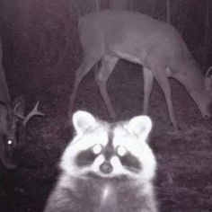 RACCOON OF THE NIGHT: | 16 Selfies That Deserve To Live Forever