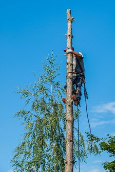 Horsham Arborist at work tree cutting. Once the tree was cut down, the customer wanted the tree stump removed and the area was returfed. Tree Removal Service, Stump Removal, Tree Surgeons, Horsham, Types Of Work, Tree Care, Removal Services, Tree Stump, Lawn Care