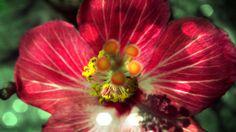 Flores em Petrópolis by PixOmatic