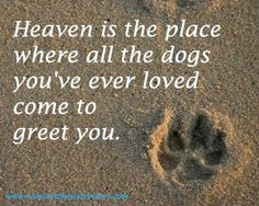 Heaven is the place where all the dogs you've ever loved come to greet you.