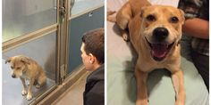 This dog went from dejected to delighted after getting a new home. Marla Goldsmith and her boyfriend knew their pup, Spokey, was the one when they first laid eyes on her at the Maryland SPCA Monday. So they plucked her from the shelter and took h...