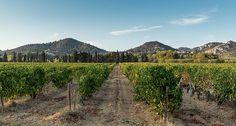 Un paisajista crea un sistema para incrementar el rendimiento de los viñedos