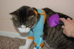 Brushing with the Healthy Kitty Care Harness!!