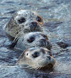 3 seals