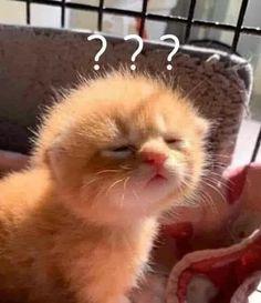 Cute Baby Cats, Cute Little Animals, Cute Cats And Kittens, Cute Funny Animals, Kittens Cutest, Ugly Cat, Pet Ducks, Cute Cat Memes, Dibujos Cute