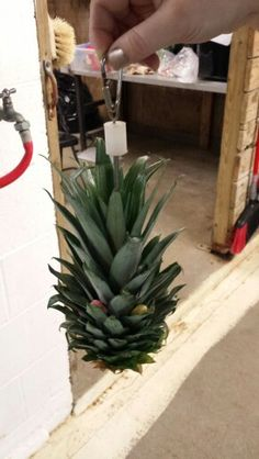 Pineapple top skewered and filled with treats-great for parrots or small primates