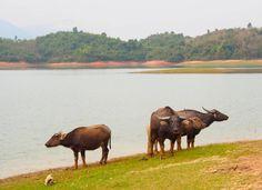 Laos - Land of a Million Elephants - ABAX