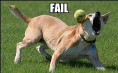 doggy fail...