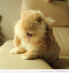 #bunny #animals #bunnies