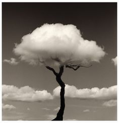 Rain Clouds over a dead tree. love the irony of this image. Chema Madoz