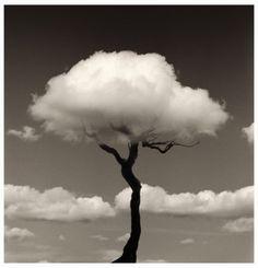 Chema Madoz. Soft tree
