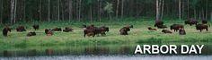 Arbour Day, Pet Day, Bison, Animals, Animales, Animaux, Animais, Animal