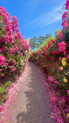 #heaven #peaceful #naturelovers #flowers #floral #بهشت #باغ #طبیعت #ارامش Wallpaper Nature Flowers, Beautiful Landscape Wallpaper, Flowers Nature, Exotic Flowers, Beautiful Landscapes, Beautiful Gardens, Beautiful Photos Of Nature, Amazing Nature, Beautiful Flowers