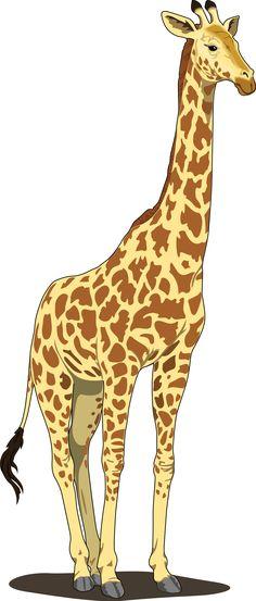 Giraffe Clipart Widescreen 2 HD Wallpapers