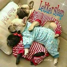 Funny Animals, Cute Animals, Goeie Nag, Afrikaans Quotes, Good Night Sweet Dreams, Good Night Image, Good Night Quotes, Animals Beautiful, Cute Dogs