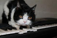 Pokey the Cat #Pokey #Photos