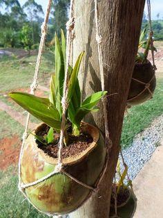 N'artesanato: A sustainable idea ! Orchid Planters, Orchids Garden, Diy Planters, Garden Planters, Indoor Garden, Garden Terrarium, Succulent Gardening, Succulents Garden, House Plants Decor