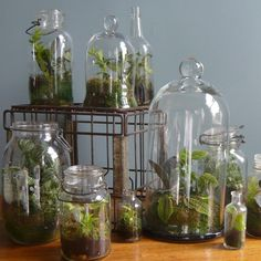 What is a Terrarium? A Terrarium is miniature garden in an artificial environment, in which small plants and animals may be kept as ornament… Mini Terrarium, Terrarium Cactus, How To Make Terrariums, Glass Terrarium, Cacti, Decoration Plante, The Bell Jar, Bell Jars, Bottle Garden