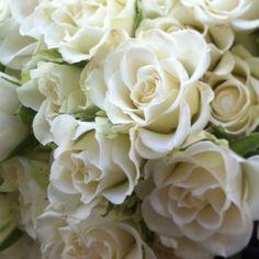 Rosas blancas #rosa #rosas #rosasblancas #rosablanca #flores #floresblancas #moonflowerartefloral