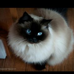 <3 looks like cat from childhood, oskar. meow!