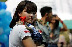 """CONCURSO DE MASCOTAS EXÓTICAS. Los espectáculos y atracciones con fauna salvaje en Tailandia atraen a miles de turistas gracias a su atractivo exótico, que muchas veces esconde denuncias, por parte de ONGs, de explotación, maltrato y tráfico ilegal de animales. """"Las actuales leyes sobre maltrato animal en Tailandia empezaron a aplicarse a finales del año 2014 y continúan sin cumplirse al 100%. Además, se centran mayoritariamente en animales domésticos. (EFE) Mirá toda la Fotogalería ..."""
