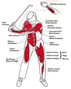 chiropractic and golf - Google Search