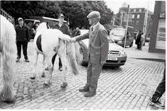Image result for iconic images of dublin Dublin, Animals, Image, Animales, Animaux, Animal, Animais