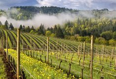 Willamette Valley-My home