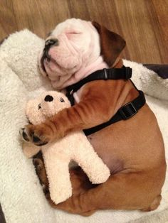 This little puppy stayed home: | 20 Puppies Cuddling With Their Stuffed Animals During Nap Time