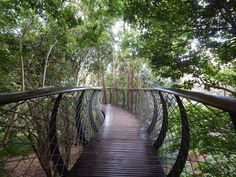 Conheça o Jardim Botânico Kirstenbosch em Cape Town (África do Sul)