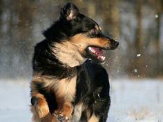Kaikkien koirien tulee päästä päivittäin liikkumaan