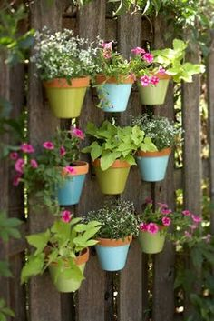 you could be adventurous with potted colour and creatively hang them on your fence