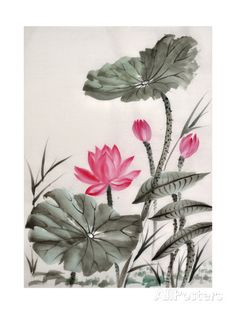 Watercolor Painting Of Lotus Flower Prints by Surovtseva at AllPosters.com