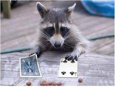 En tiedä kähveltäisinkö kortit vai pelaisinko sittenkin. Panokset näyttävät kohtuullisen syötäviltä.