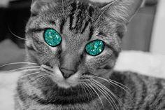 glittercats