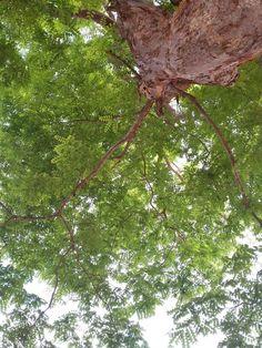 Natureza ,mexe com a minha alma . foto de Amanda Gomes Pimenta