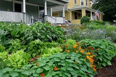 The Best Plants for Edible Gardens. Nasturtium: An orange or yellow flower that adds a pop of color to any plate and adds a bit of a spicy flavor to salads.