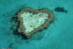 A heart-shaped coral reef in Australia.. I want to visit Australia. : )