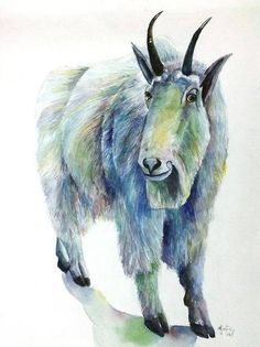 Himalayan Goat - Colorful doodle ~ By Ajeet (Leo)